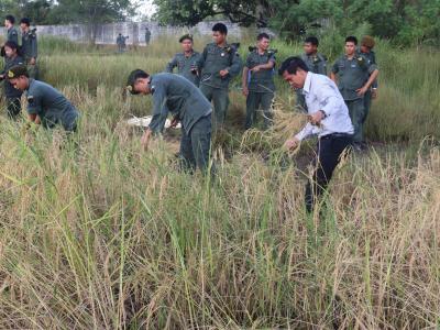 กิจกรรมเกี่ยวข้าวลูกเสือ นักศึกษาวิชาทหาร ประจำปี2559